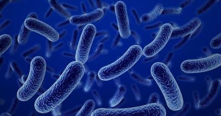 bacillus-clausii-tro-thu-dac-luc-cua-he-tieu-hoa