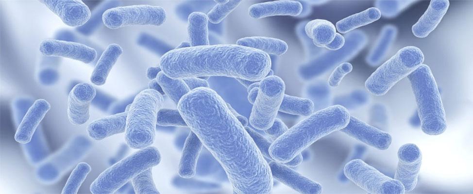 bao-tu-vi-khuan-bacillus-clausii