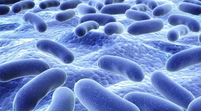 Hiệu quả chăn nuôi và chất lượng của chế phẩm probiotics
