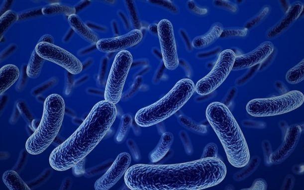 loi-khuan-bao-tu-bacillus