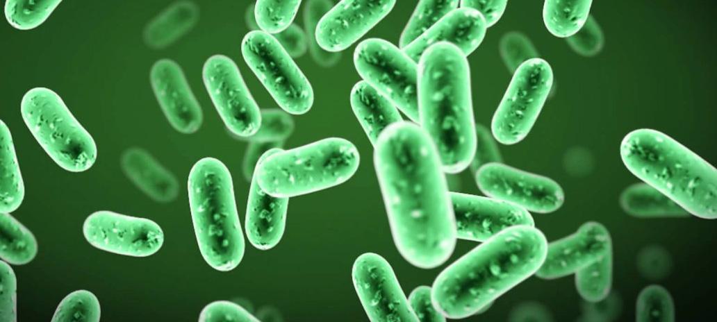 anh-huong-probiotic-bacillus-dang-bao-tu-chiu-nhiet-den-nang-suat-vi-khuan-va-hinh-thai-vi-the-bieu-mo-duong-ruot-ga-thit-long-mau