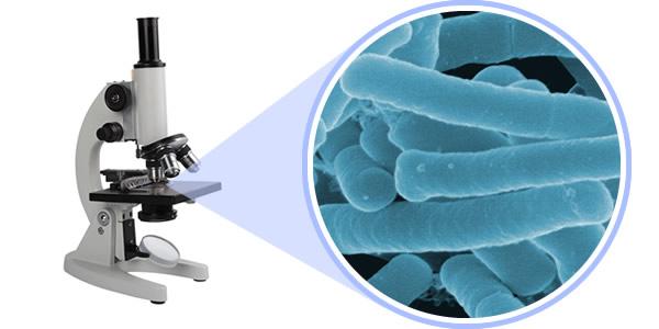che-pham-sinh-hoc-lactobacillus -acidophilus