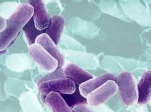 vi-sinh-lactobacillus-trong-che-pham-sinh-hoc