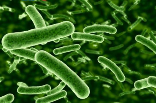 probiotics-bao-tu-la-gi