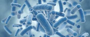 tac-dung-probiotics-trong-chan-nuoi